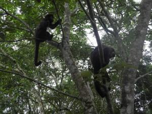 Iguazu_016_DSCN8381