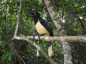 Iguazu_023_DSCN8442