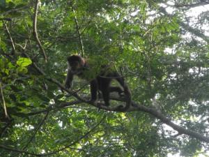 Iguazu_049_DSCN8715