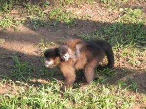 Iguazu_050_DSCN8723