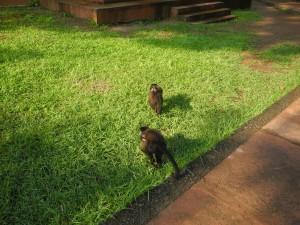 Iguazu_051_DSCN8725