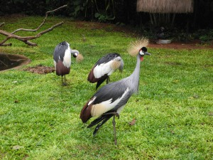 Iguazu_075_DSCN8971