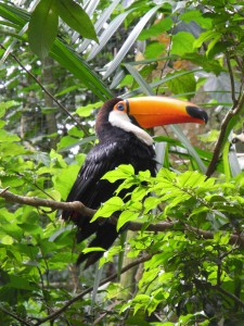 Iguazu_079_DSCN8997