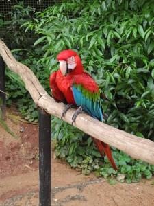 Iguazu_086_DSCN9103