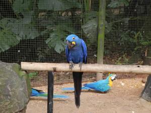 Iguazu_088_DSCN9107