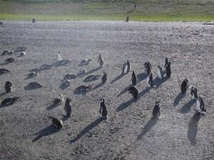 Pinguinera_014_DSCN6966