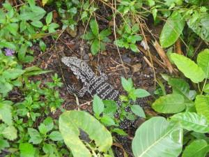 Iguazu_024_DSCN8443