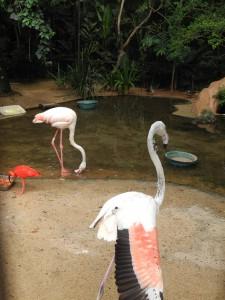 Iguazu_073_DSCN8952