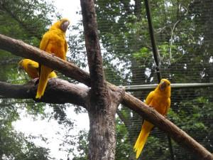 Iguazu_085_DSCN9093