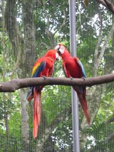 Iguazu_086_DSCN9121
