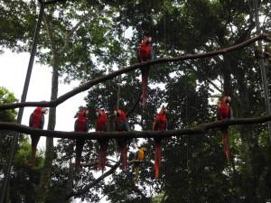 Iguazu_087_DSCN9106