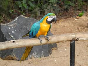 Iguazu_089_DSCN9115