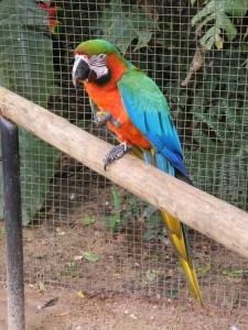 Iguazu_090_DSCN9118