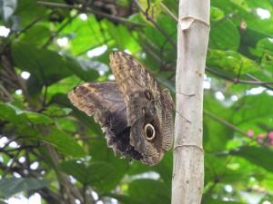 Iguazu_091_DSCN9127