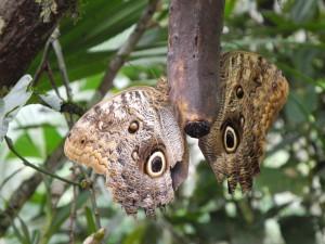 Iguazu_092_DSCN9132