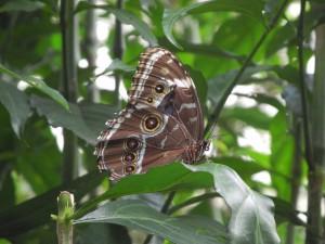 Iguazu_093_DSCN9140