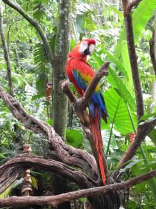 Iguazu_094_DSCN9149