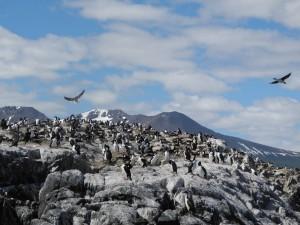 Pinguinera_003_DSCN6723